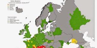 """Áreas de distribución del mosquito tigre en Europa. Murcia se encuentra entre las zonas """"asentadas"""" desde el año pasado"""