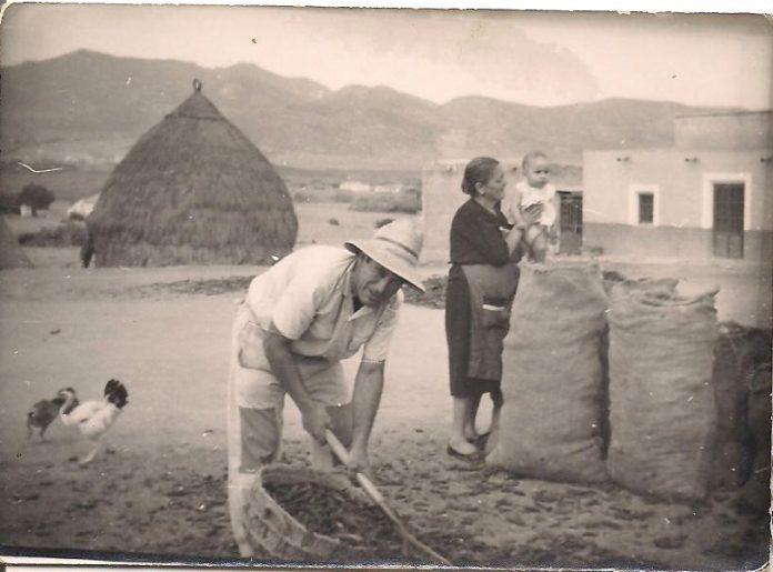 Fotografía de unos vecinos de Calblanque recogiendo algarrobas