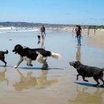 La Comunidad Autónoma informa a los ayuntamientos sobre la normativa para las playas para mascotas.
