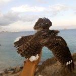Isla Grosa es uno de los pocos espacios naturales donde las aves migratorias pueden anidar sin presión humana.