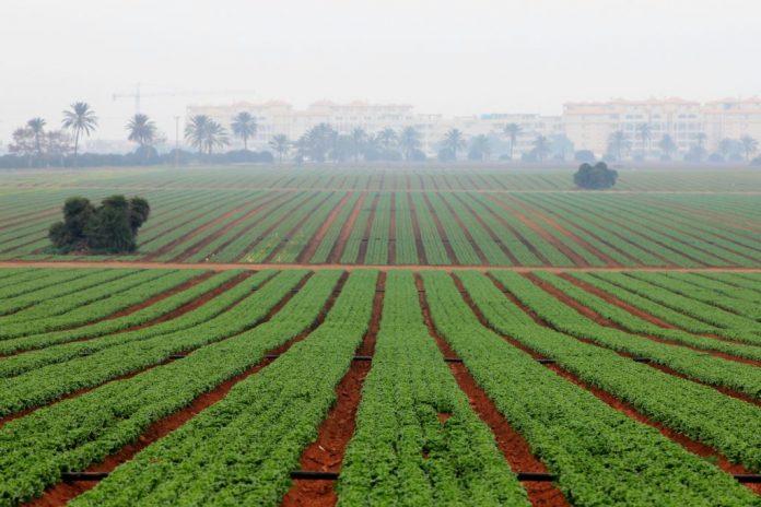 Los agricultores buscarán en la nueva Cátedra nuevas formas de explotación agrícolas compatibles con el Mar Menor